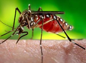 gene drive gefahr oder wirksames mittel gegen malaria un konferenz ber t ber moratorium. Black Bedroom Furniture Sets. Home Design Ideas