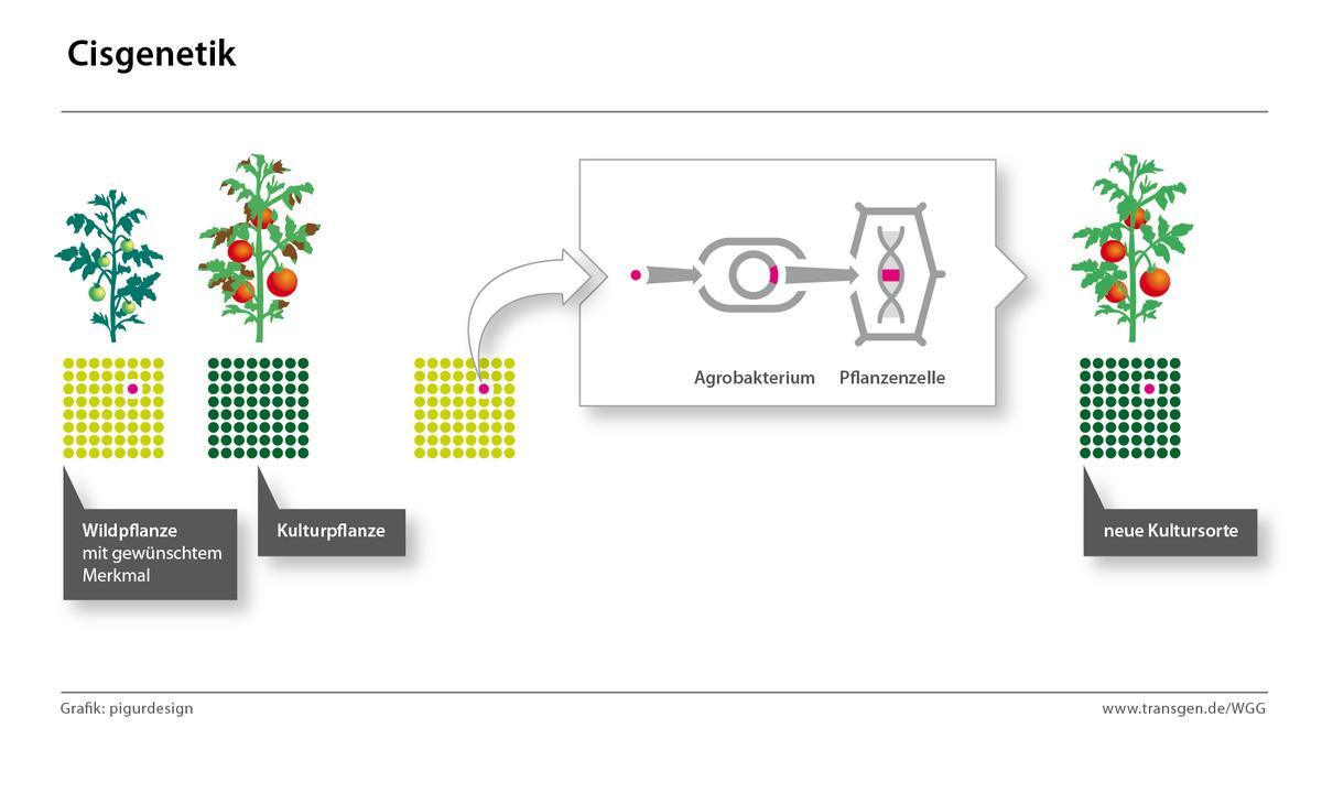 mutationen bei tieren und pflanzen