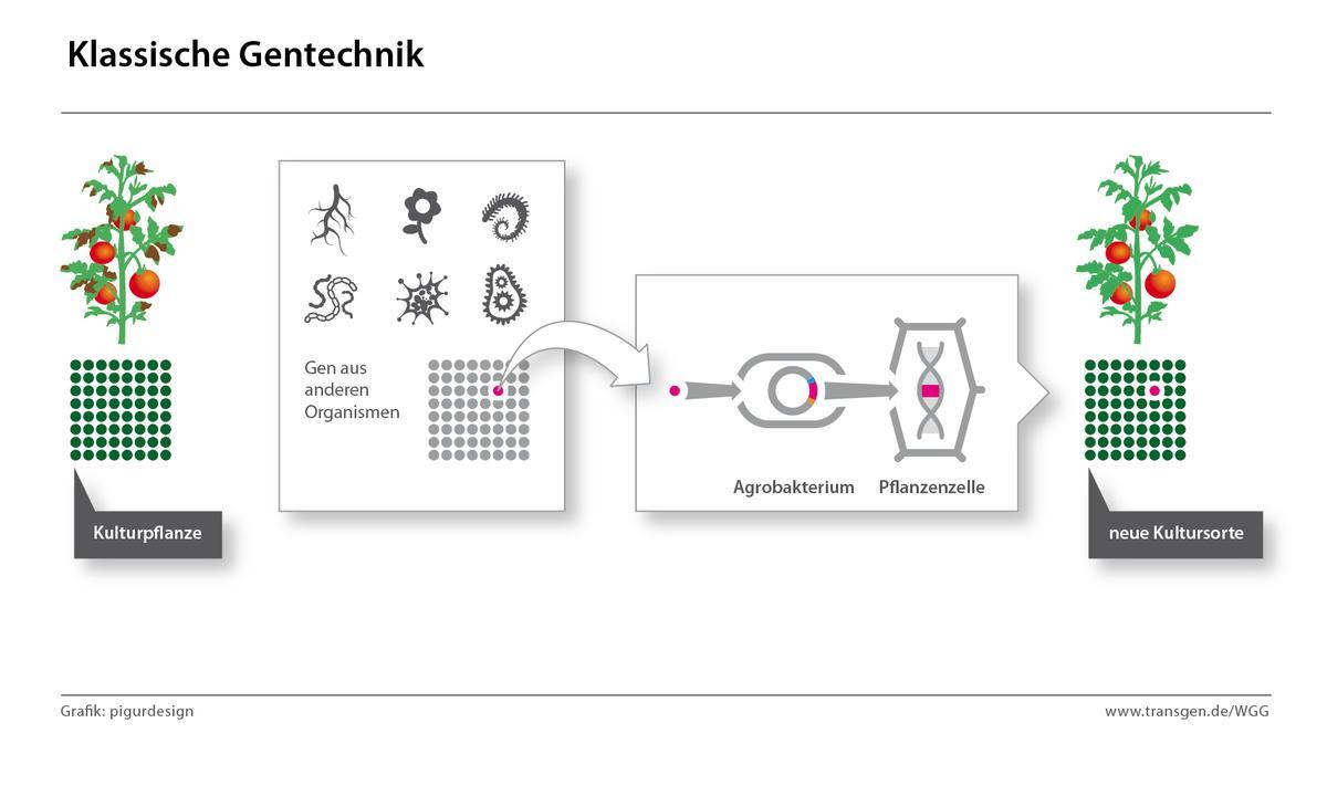 werkzeuge der gentechnik biologie
