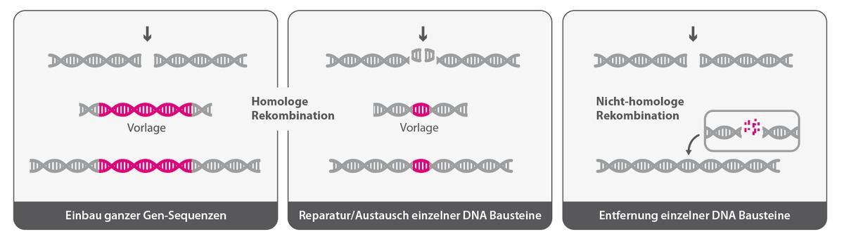 genome editing mit crispr cas
