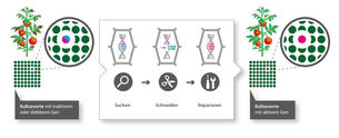 Genome Editing 2