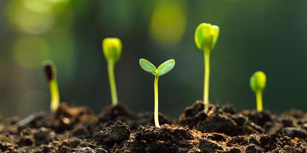 Uber Das Mikrobiom Die Pflanze Starken Eine Vision Wird Konkret
